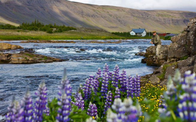 Located in a stunning, glacially-forged valley in southwest Iceland, the Laxá in Kjós is considered one of the best small salmon streams in the world. The wild Atlantic salmon, sea trout and views, however, are anything but diminutive. Photo: Oskar Sveinsson